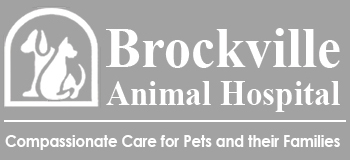 Logo for Veterinarians in Brockville, ON | Brockville Animal Hospital
