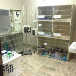 pet intensive care - Dallas TX